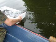 Zarybianie wód